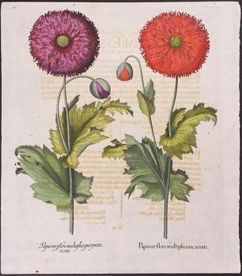 Art & Antiques for the Holidays - D. M. DeLaurentis Fine Antique Prints by D. M. DeLaurentis, Ltd