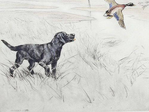 George Vernon Stokes (1873-1954) Limited edition coloured etching Black Labrador putting up ducks Pe