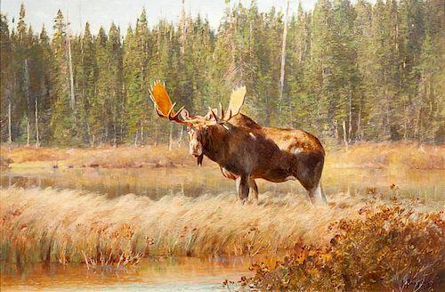 Carl Clemens Moritz Rungius (1869-1959) Bull Moose