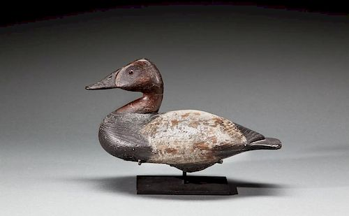 Canvasback Drake by Lee Dudley (1860-1942)