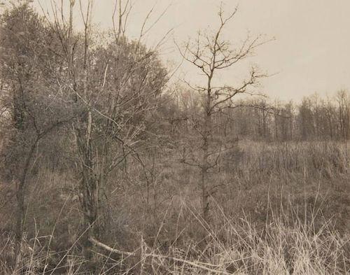 Jan Groover Landscape Platinum/Palladium  Print, Edition