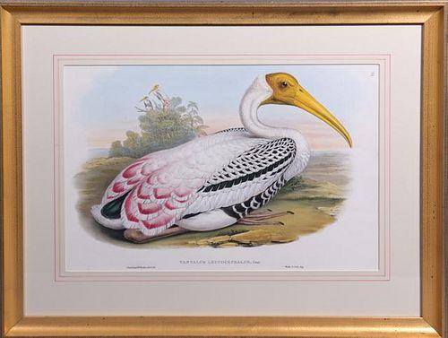 """J. Gould and H.C. Richter, """"Tantalus Lencocephalus"""
