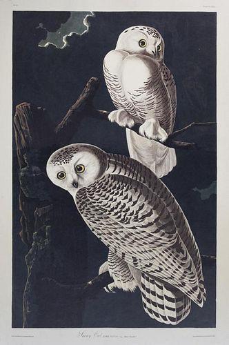 """John James Audubon (1785-1851), """"Snowy Owl,"""" No. 2"""