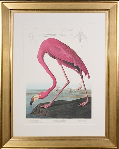 "John James Audubon (1785-1851), ""American Flamingo"