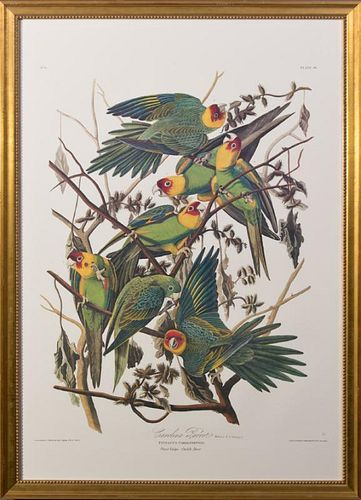 "John James Audubon (1785-1851), ""Carolina Parrot,"""