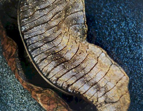 Rebecca Arnold, Dried Leaf on Beach, Nicaragua