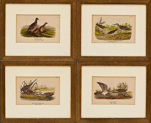 Four Framed Ornithological Colored Engravings