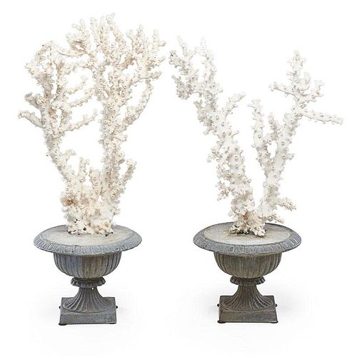 WHITE CORAL CENTERPIECES