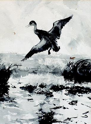 Frank W. Benson (1862-1969) Black Duck