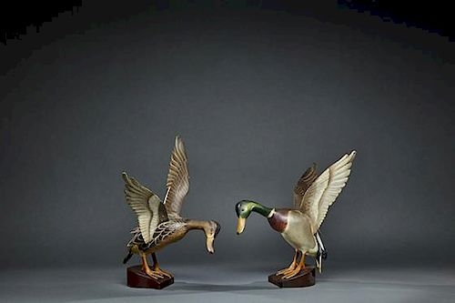 Outstanding Life-Size Flying Mallard Pair The Ward Brothers, Lemuel T. (1896-1983) and  Stephen (1895-1976)