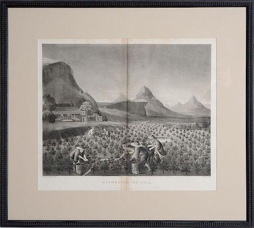 ROBERT JOHN THORNTON (1768-1837): TEACHING, OR FIRING, OF TEA; AND GATHERING OF TEA