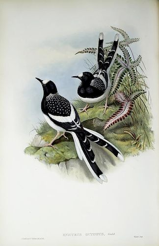 Birds of Asia, Gould, First Edition, Rare Book