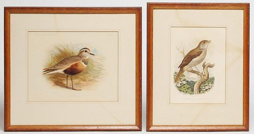 Ornithological Prints- Nightingale & Dotterel