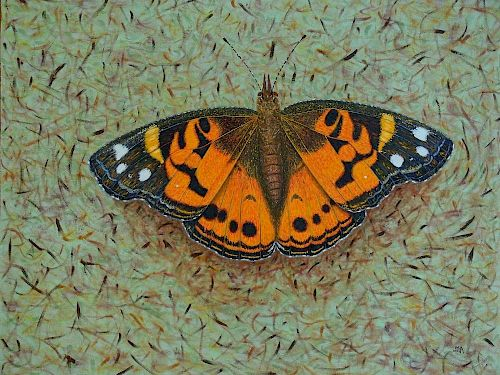 Marcos Antonio, Painted Lady Butterfly Series