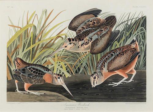 AUDUBON, John James (1785-1851) American Woodcock (Plate CCLXVIII). Scolopax minor. ca 1835 or later.