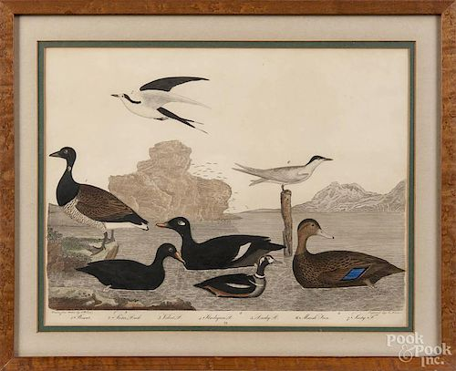 Two Alexander Wilson (1766-1813), handcolored engravings, from American Ornithology, 9 1/2'' x 12 3/4