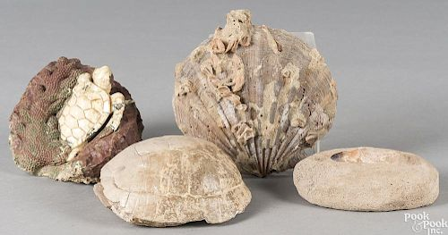 Fossilized turtle