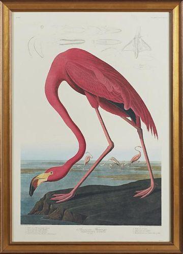 "John James Audubon (1785-1851), ""American Flamingo,"" No. 87, Plate 431, Amsterdam edition, presented in a wide gilt frame, H."