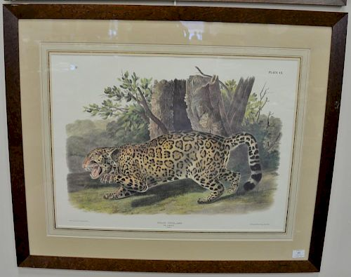 "After John James Audubon, print, Felis Onca, Linn The Jaguar, sight size 20"" x 26 1/2"".  Provenance: Property from the Credit"