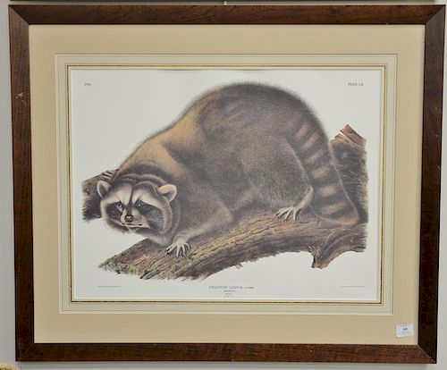 """After John James Audubon Procyon Lotor, Cuvier Raccoon (no glass), sight size 20"""" x 26 1/2"""".  Provenance: Property from the C"""