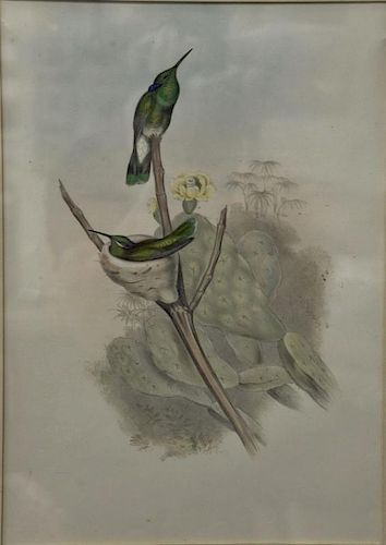 """John Gould, hand colored lithograph, Hummingbird, sight size 17 1/2"""" x 12"""".  Provenance: Property from the Credit Suisse Amer"""