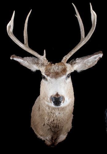 Trophy Buck Mount