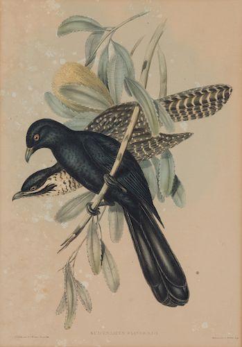 Four Hand-Colored Framed Ornithological Engravings