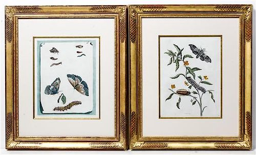 A Pair of Hand-Colored Engravings Height 13 1/4 x width 10 1/2 inches.