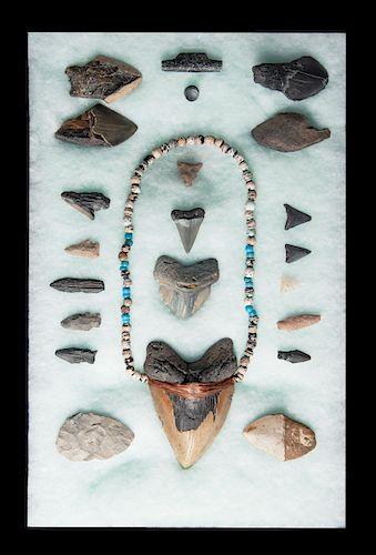 "6"" Megalodon Tooth & native Amer Artifact Display"