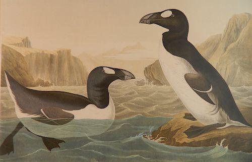 after John J. Audubon chromolithograph
