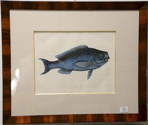 Mark Catesby (1679-1749),  pair of hand colored copper plate engravings of fish,  (1) Aurata T16;  (2) Novacula T18,  framed and mat...