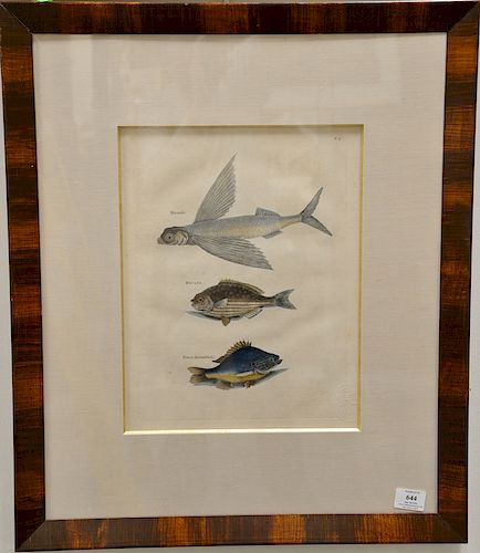 Mark Catesby (1679-1749),  pair of hand colored copper plate engravings of fish,  (1) Umbla Mino, Vulpis Bahamentis T1;  (2) Hirundo...