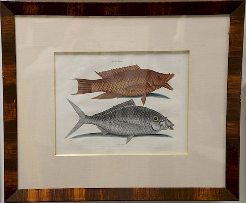 Mark Catesby (1679-1749),  pair of hand colored copper plate engravings of fish,  (1) Bagre T23;  (2) Turdus Flavus T11,  framed and...