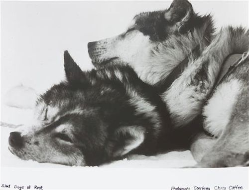 * A Collection of Loose Photographs depicting Various Dog Breeds Largest: 11 x 14 inches.