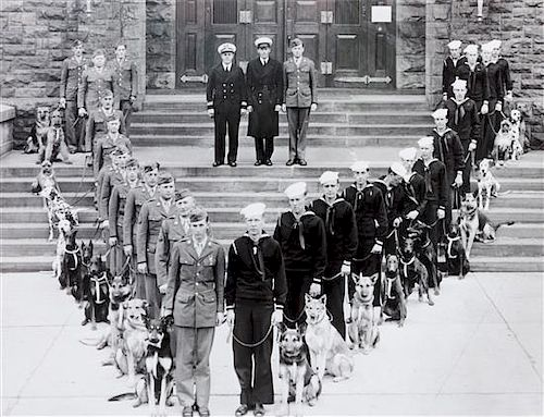 * Nine Photographs of Military and Police Dogs, Various Breeds Largest: 10 1/2 x 16 1/2 inches.