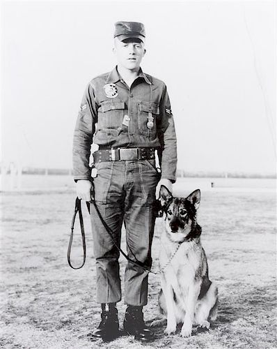 * Fourteen Photographs of Military and Police Dogs, Various Breeds Largest: 16 x 12 inches.