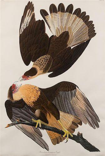 AUDUBON, John James (1785-1851). Brazilian Caracara Eagle (Plate CLXI)