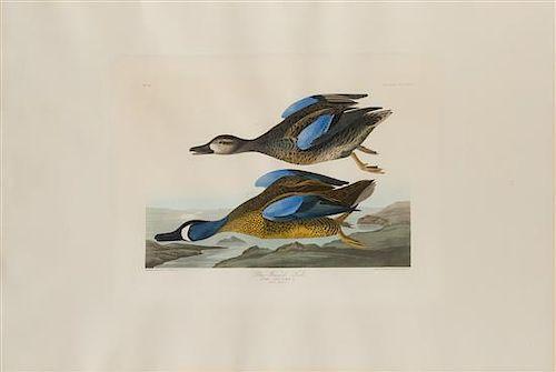 AUDUBON, John James (1785-1851). Blue-Winged Teal (Plate CCCXIII)