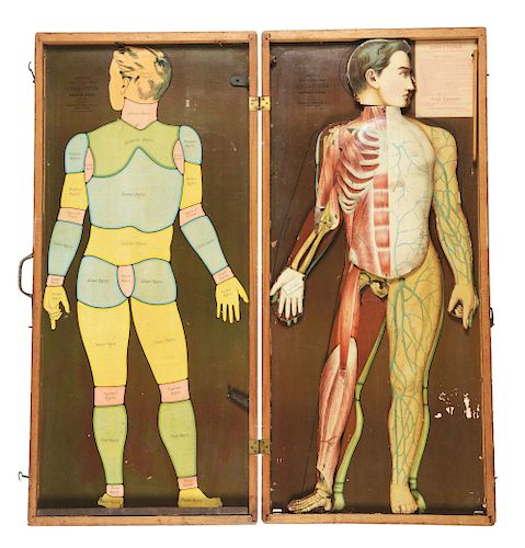 Medical Smith's Human System in Wooden Case.