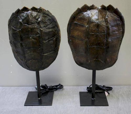 Pair of Decorative Shell Form Lamps.