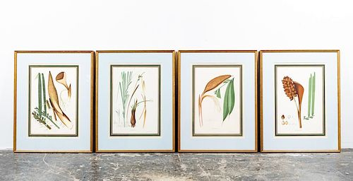 Set of Four 19th C. Botanical Chromolithographs