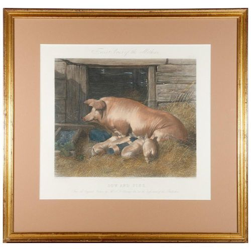 A 19th century English print of a sow and piglets.