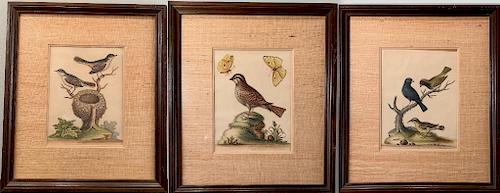 Three Ornithological Prints by George Edwards, British