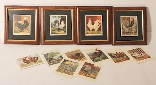 11 Cassell's Poultry Chromolithographs 1870's