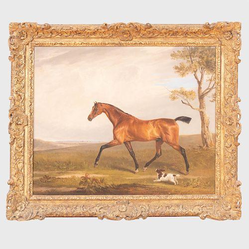 Edmund Bristow (1787-1876): Bay Hunter with a Spaniel in a Landscape