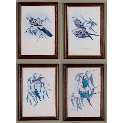SET OF 4 FRAMED J. GOULD COLOR PRINTS, EXOTIC BIRDS