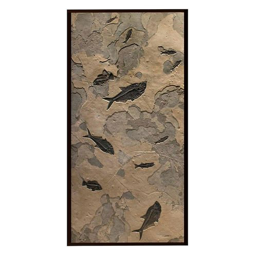 11 FOSSILIZED EOCENE FISH IN WALL MURAL