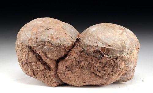 Chinese Cretaceous Fossilized Hadrosaur Eggs (pr)
