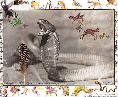 Peter Beard (1938)  - Spitting Cobra, Tsavo, 1960