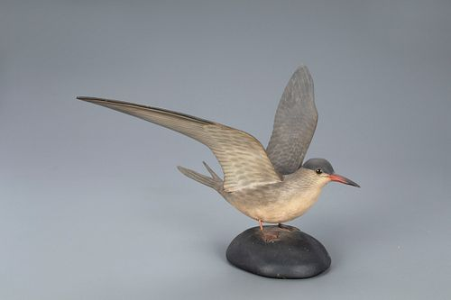 Alighting Tern, A. Elmer Crowell (1862-1952)